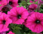 flowerland - Seasonal Plants