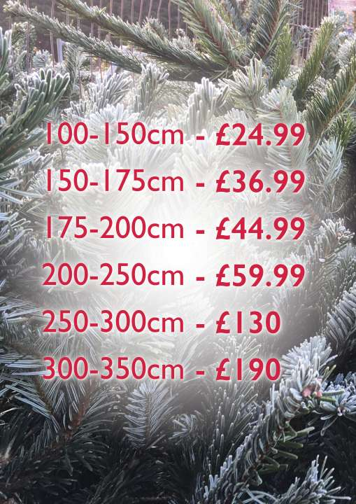 Get your great value premium grade Christmas Tree at Flowerland Garden Centre, in Buckinghamshire