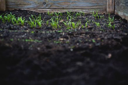 How to improve your soil this time of year?