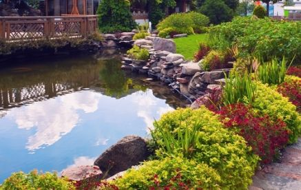 Summer pond care